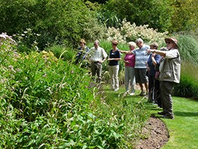 Guided Butterfly Walk
